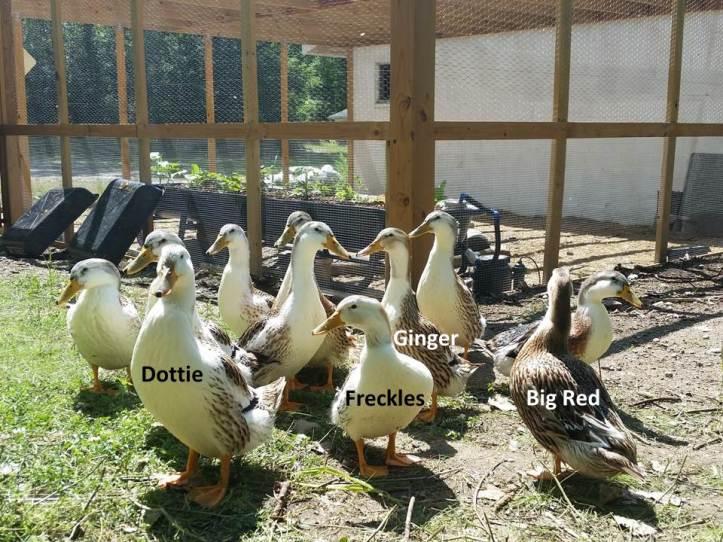 ducknames